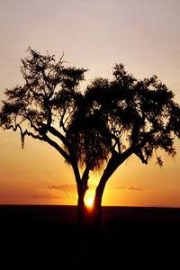 pohon senja hr1